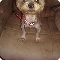 Adopt A Pet :: Meeko - Goodyear, AZ