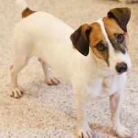 Adopt A Pet :: Oscar - Cartersville, GA
