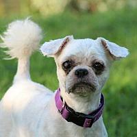 Adopt A Pet :: Piper Turner - Urbana, OH