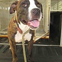 Adopt A Pet :: Dezzie - Newnan City, GA