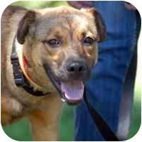 German Shepherd Dog Mix Dog for adoption in Denver, Colorado - Pippy