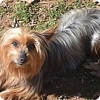 Adopt A Pet :: Katie - Greensboro, NC