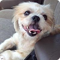 Adopt A Pet :: Diamond - Davie, FL