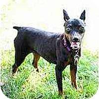 Adopt A Pet :: claudia - Florissant, MO