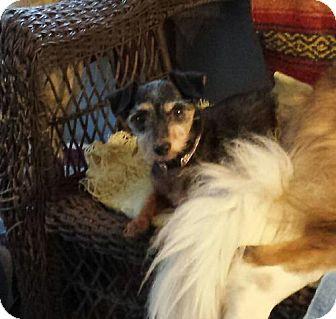 Terrier (Unknown Type, Medium) Dog for adoption in Columbus, Ohio - Clem Kadiddlehopper