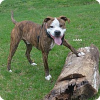 Adopt A Pet :: Cass - Independence, MO