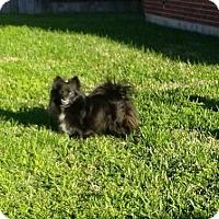 Adopt A Pet :: Osgood - conroe, TX