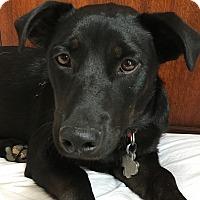 Adopt A Pet :: Gemme - Austin, TX