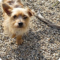 Adopt A Pet :: Charlie - Wyanet, IL