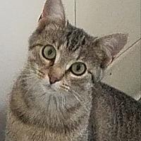Adopt A Pet :: Heidi - Colfax, IA