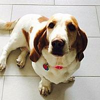Adopt A Pet :: Opal - Salt Lake City, UT