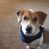 Adopt A Pet :: Adam - Northport, AL