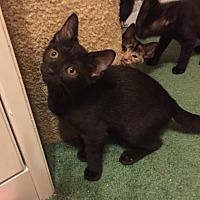 Adopt A Pet :: Cindy - Barrington, NJ