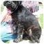 Photo 2 - Schnauzer (Miniature)/Poodle (Miniature) Mix Dog for adoption in North Judson, Indiana - Soda