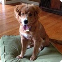 Adopt A Pet :: Sarah - Foster, RI