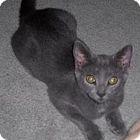 Adopt A Pet :: Paxton - Richmond, VA