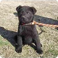 Adopt A Pet :: Scarlet - Adamsville, TN