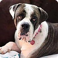 Adopt A Pet :: Tiny - Lake Worth, FL