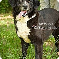 Adopt A Pet :: Goalie - Fort Valley, GA