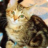 Adopt A Pet :: Los Angeles - Green Bay, WI