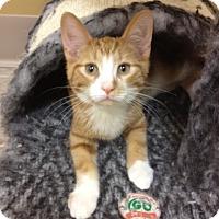 Adopt A Pet :: Charlie - Byron Center, MI