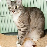 Adopt A Pet :: Tami - Shelton, WA