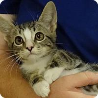 Adopt A Pet :: OTIS - Diamond Bar, CA