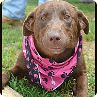 Adopt A Pet :: Molly - Franklin, TN