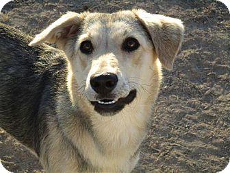 German Shepherd Dog/Husky Mix Dog for adoption in Liberty Center, Ohio - Jeanie
