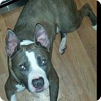 Adopt A Pet :: Adam - Davison, MI
