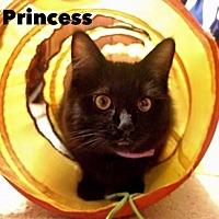Domestic Mediumhair Cat for adoption in Napa, California - Princess & Batman