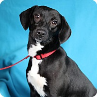 Adopt A Pet :: Jessa - Minneapolis, MN