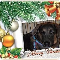 Adopt A Pet :: Galax - Crowley, LA