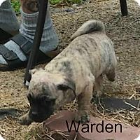 Adopt A Pet :: Warden - House Springs, MO