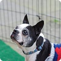 Adopt A Pet :: Edna - San Francisco, CA