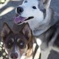 Adopt A Pet :: Bonita and Hamlet - Canyon Country, CA