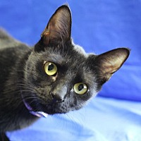 Adopt A Pet :: Esther - Winston-Salem, NC
