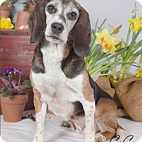 Adopt A Pet :: Gigi - Yardley, PA