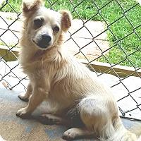 Adopt A Pet :: Barry - San Antonio, TX