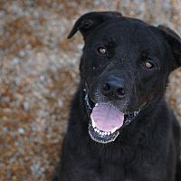 Adopt A Pet :: Elliot - Cranston, RI