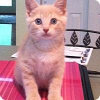Adopt A Pet :: Latte - Trenton, NJ