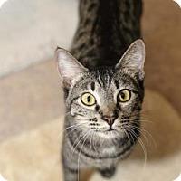 Adopt A Pet :: Craig - Palm Springs, CA