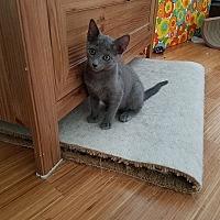 Adopt A Pet :: Poco - Tampa, FL