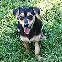 Adopt A Pet :: Kurt - Rochester, NY