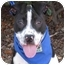 Photo 1 - Pit Bull Terrier Mix Puppy for adoption in San Diego, California - Parker