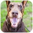 Photo 1 - Doberman Pinscher Dog for adoption in Santee, California - Zorro