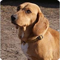 Adopt A Pet :: Minnie - Glenpool, OK