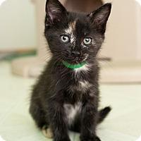 Adopt A Pet :: Lupe - Shelton, WA