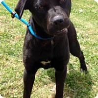 Adopt A Pet :: ONYX - Glastonbury, CT