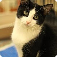 Adopt A Pet :: Jack - Sacramento, CA